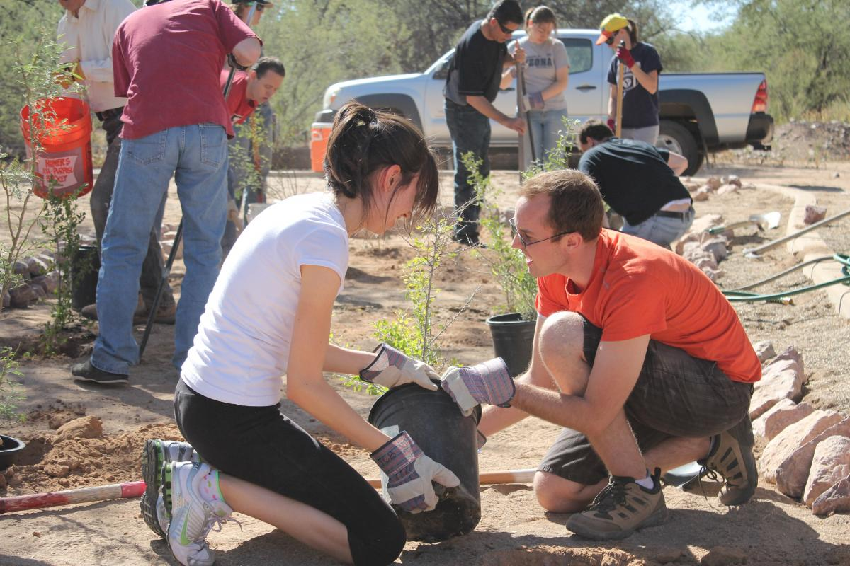 Volunteers install rainwater catchment basins, native plants and an elevated path at the Atturbury Wash in Tucson