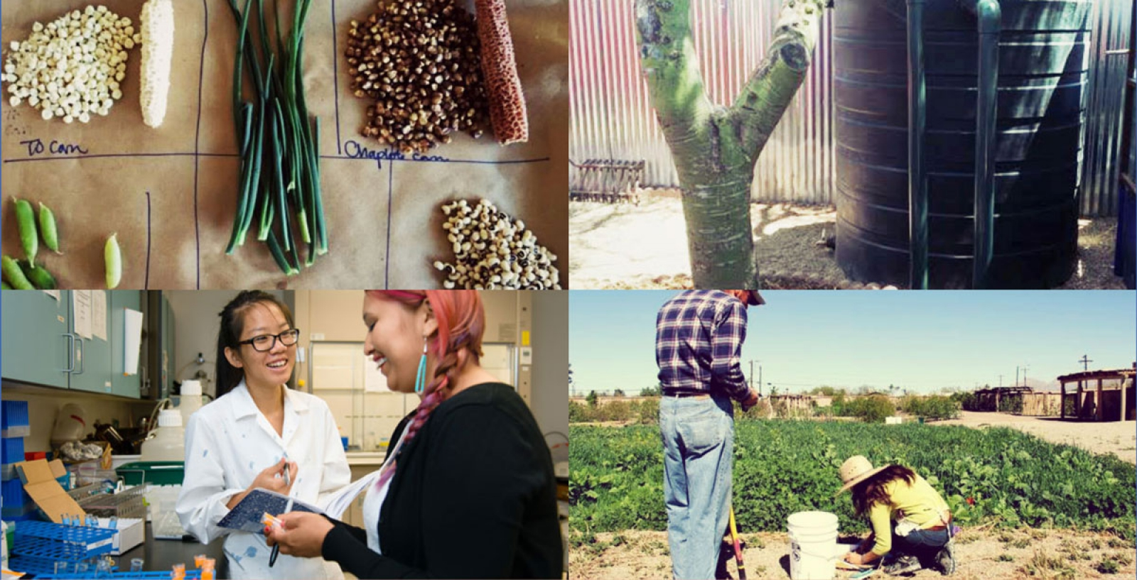 Project Harvest collage