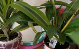 Anne-Marie Meegan -Watering plants including peace lily